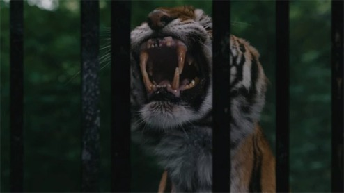 tiger in the forest of the night